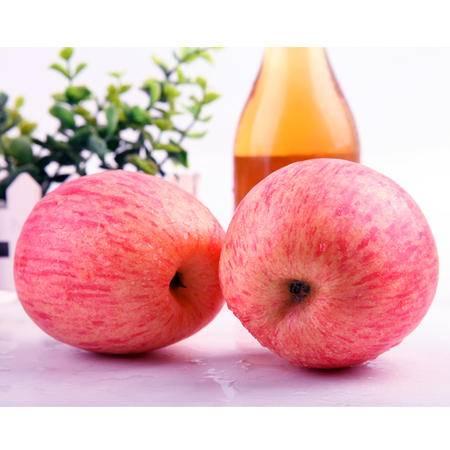 洛川苹果臻品9枚