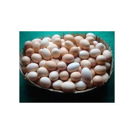 【重庆特产】盘龙土鸡蛋