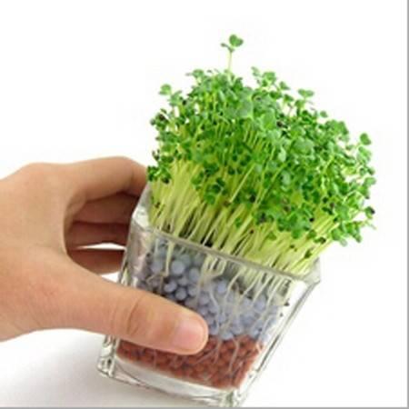 耀点100 负离子陶碳球植栽 植物工艺品 办公室微型盆栽