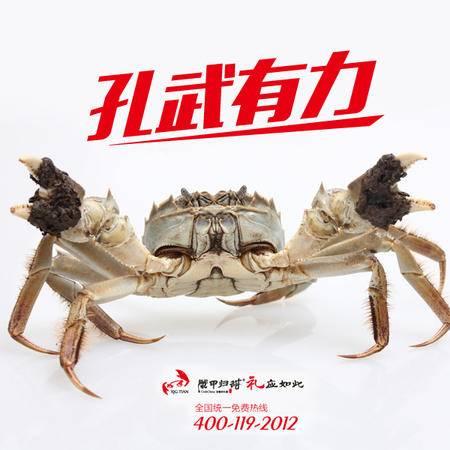 现货大闸蟹10只装688款 天然湖水 源生态养殖螃蟹 好螃蟹是有点甜的