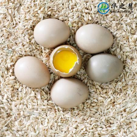 华之慧大别山七彩山鸡散养新鲜山鸡蛋野鸡蛋30枚包邮