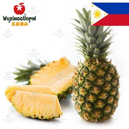 【五星果品】菲律宾水果产地   牛仔凤梨   优选1个