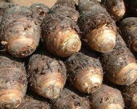 新鲜小毛芋头 江西农家自种芋头新鲜芋艿有机芋头香芋