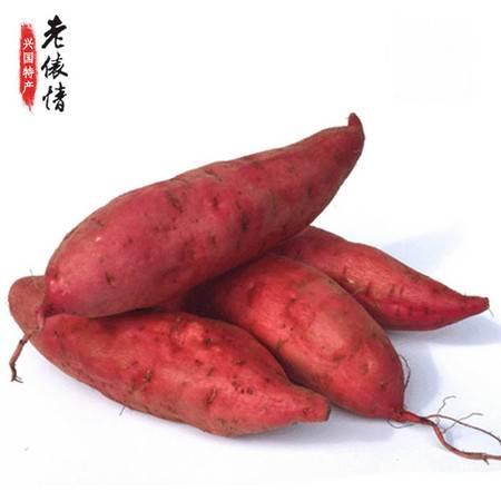 【预售】江西兴国特产老俵情新鲜红薯地瓜甘薯有机小香薯现挖5斤包邮将于11月16日发货