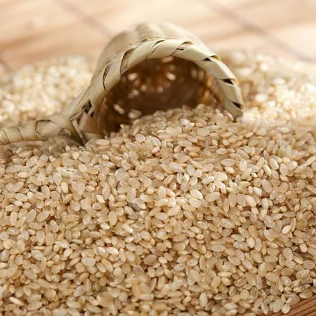 郑家屯糙米 富硒糙米玄米 东北大米五谷杂粮 胚芽米糙米400g*3袋