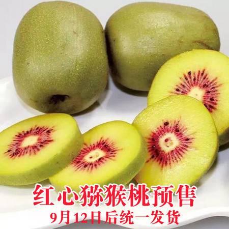 【预售】助力金寨!安徽邮政精准扶贫:红心猕猴桃颗颗传情 9月12日统一发货