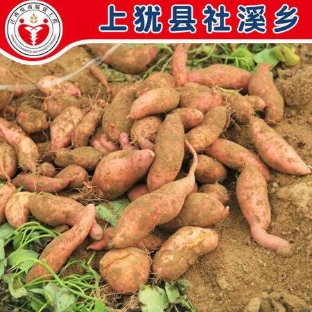 上犹特产 社溪村 农家红薯5斤装