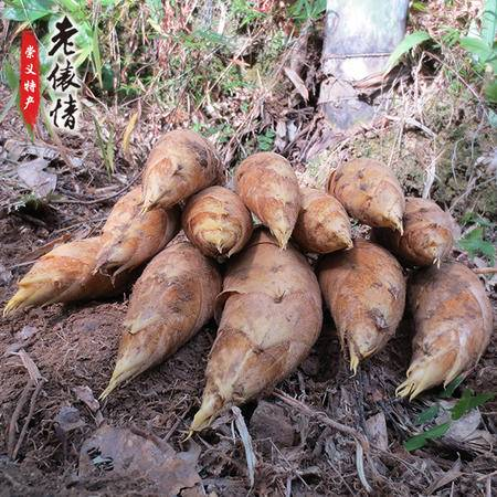 崇义特产 新鲜现挖野生冬笋 5斤装 原产地崇义 竹子之乡 (偏远地区不发)