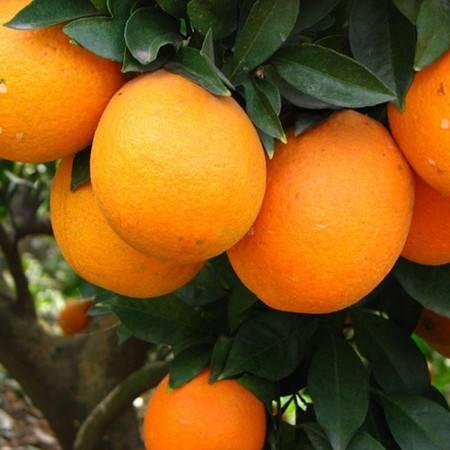 信丰特产 正宗赣南脐橙 精品果20斤装新鲜现摘 原产地信丰(部分地区不发货)预计3天内发货