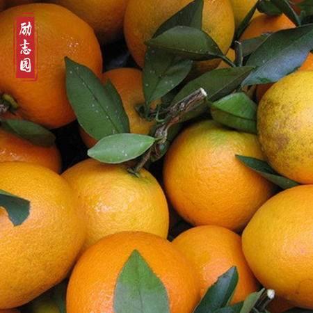 赣南血橙 宁都励志园 血橙  5斤装 (偏远地区不发)