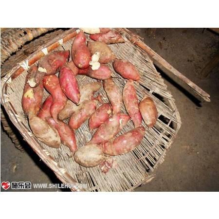 峡江新鲜红薯6斤农家地瓜生番薯小香甘薯