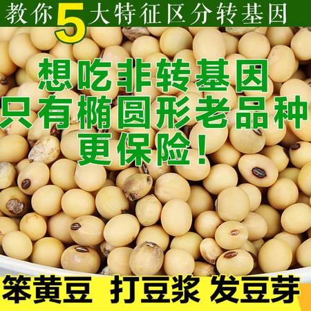 黄豆非转基因 靖安高湖农家自产椭圆黄豆 500g