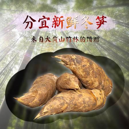 江西省新余特产分宜大岗山冬笋新鲜采挖味道鲜美5斤装