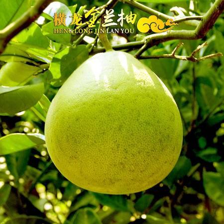 老俵情安福金兰柚 2个装约3斤包邮