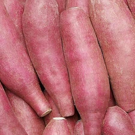 万安土特产 红薯