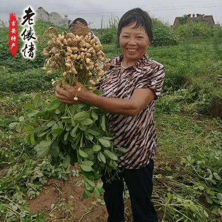【带壳湿花生 新鲜现货】泰和-农家自种花生 16年新鲜出土 现挖现发