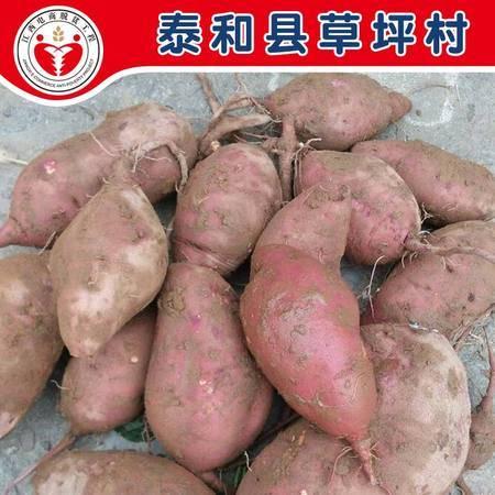 泰和沿溪草坪村红薯