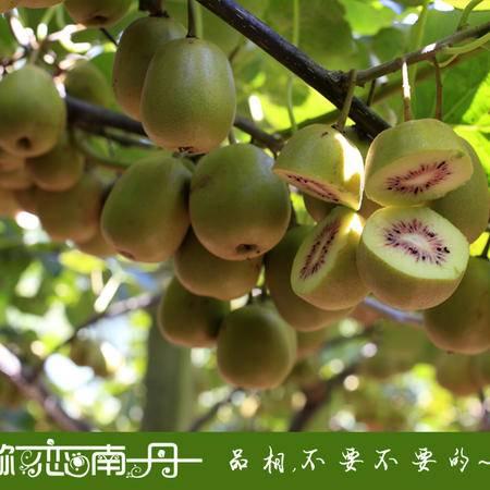 【广西特产】 南丹红心弥猴桃 5斤精品装 精选80克/个 广西区内包邮