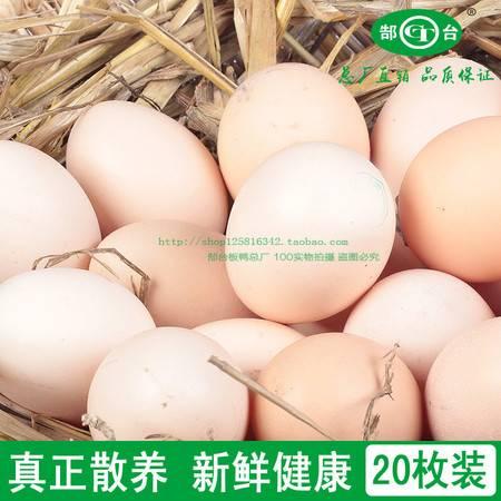 安徽特产淮河农家散养土鸡蛋无公害新鲜笨鸡蛋草鸡蛋20枚包邮