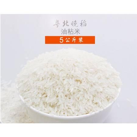 果蜂 清远晚稻油粘米10斤装【配送仅限广州地区】