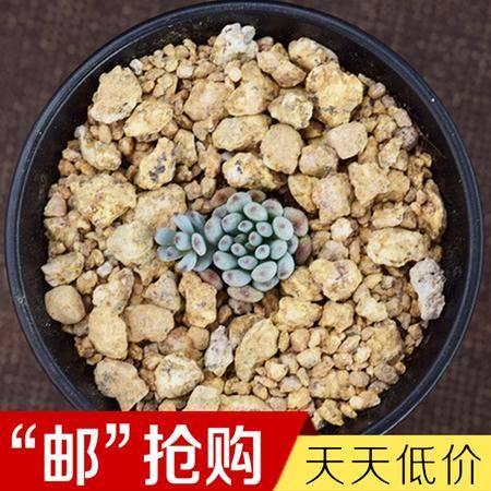 花间莳 蓝豆 2cm(带盆带土)萌美多肉植物盆栽 办公室家居生态花卉绿植