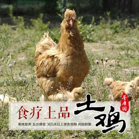 【限新乡销售】誉康源散养土公鸡 约1.25kg/只 果林散养肉嫩汤鲜 现宰现发冰袋保鲜 土鸡柴鸡