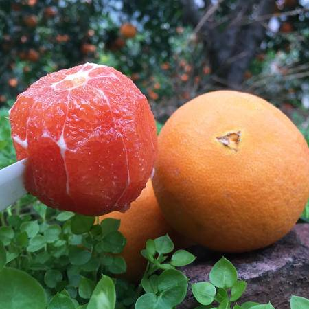 草鲜禾堂 秭归中华红红肉脐橙 果园直发 9斤家庭装