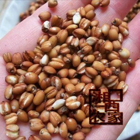 湘西农家自产薏米天然有机红薏仁红小米苡仁黑薏米红豆薏米水意米480g
