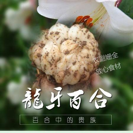 永丰特产藤田鲜百合