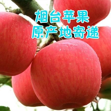 烟台苹果 栖霞红富士苹果80mm     箱装2800-3000g 生态示范田现货包邮