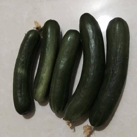 水果黄瓜(乳黄瓜,荷兰黄瓜)