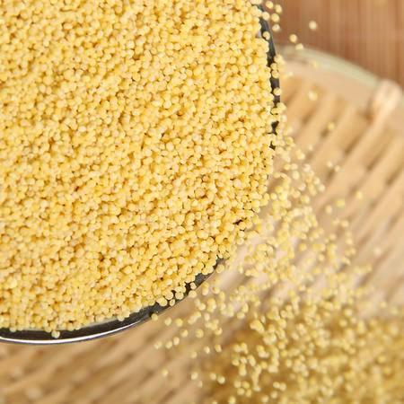 农家自产黄小米月子米小黄米宝宝米有机黄小米熬粥小米营养米500g
