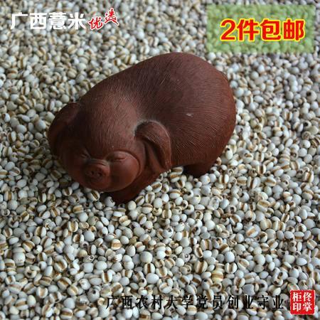 广西农家自种有机优质小薏米仁 香糯薏仁500g 巴马发货