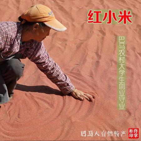 包邮【巴马特产】红小米 调理脾胃 有机小米野生红小米 500克 /件