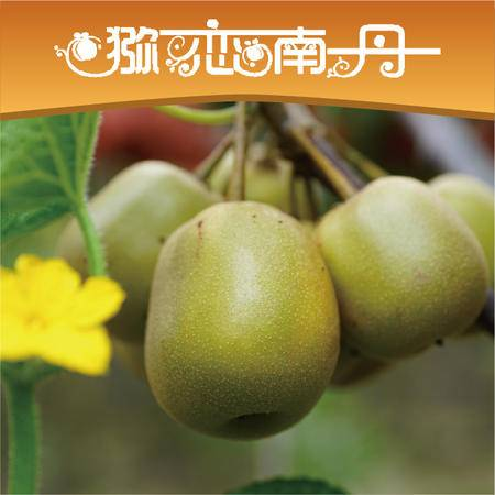 广西南丹红心红阳猕猴桃农家自产 红心30粒应季现摘奇异果鲜水果