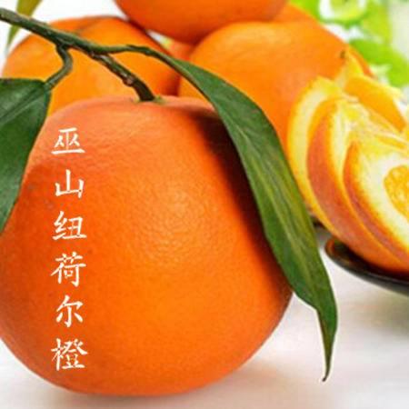 巫山特产曲尺纽荷尔脐橙  家庭装(约10kg)
