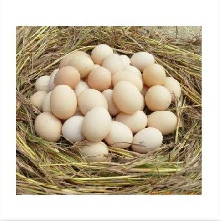 【广德馆】30包邮 徽州农家 正宗土鸡蛋 放养柴鸡蛋  粮食喂养