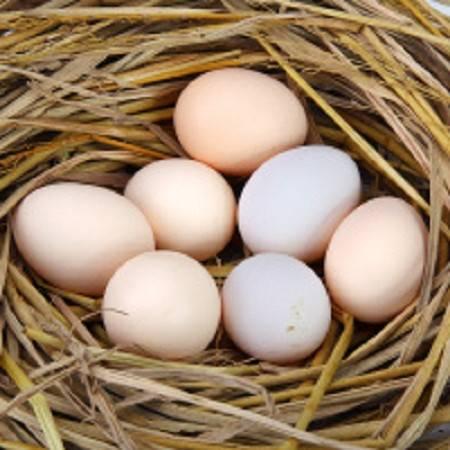 石柱特产 农家自产 原生态放养 土鸡蛋10枚装
