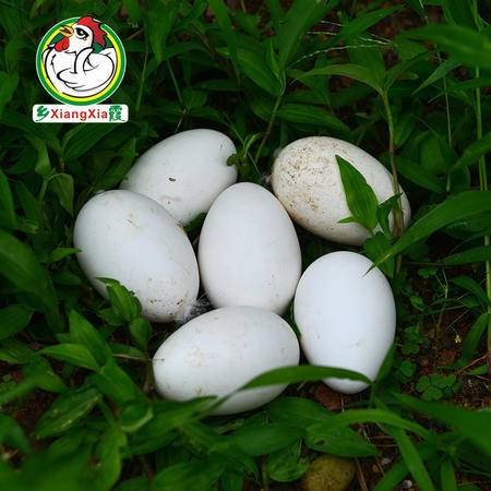 乡霞新鲜鹅蛋 农家散养土鹅蛋15枚装