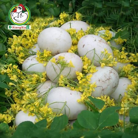 乡霞鲜鸭蛋 农家散养新鲜土鸭蛋80枚装