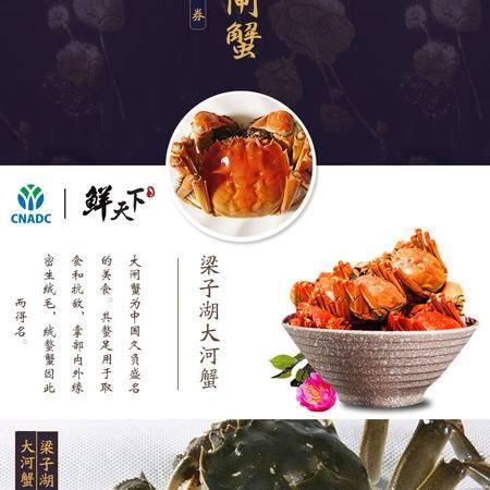 周周爆款go go go武汉梁子湖 梁子大闸蟹(3公3母)188型螃蟹套餐实物