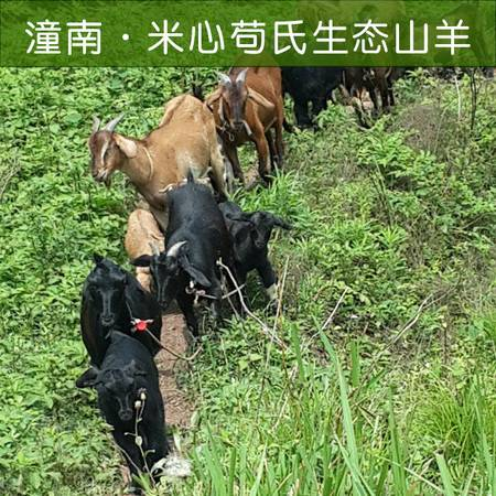 重庆潼南 米心毗卢村生态山羊 25-30斤/只(销限潼南区内)