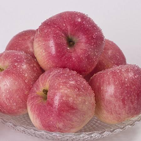 重庆潼南 帝安农庄高山红苹果 12个/件 约3.08kg