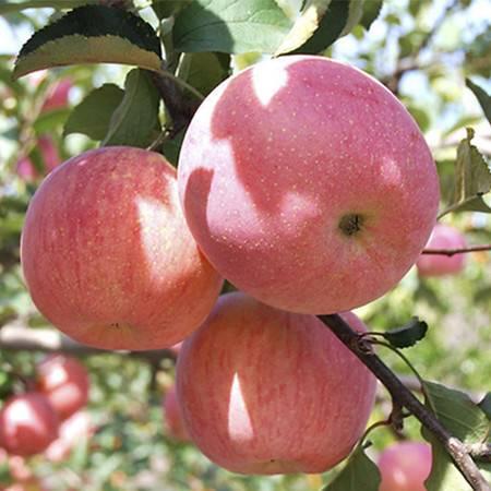 重庆潼南 帝安农庄平原生态红苹果 12个/件 约3.08kg