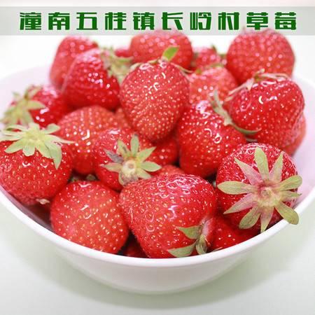 重庆潼南 五桂镇长岭村法兰地草莓(果酸味) 1公斤(仅限潼南区内销售)