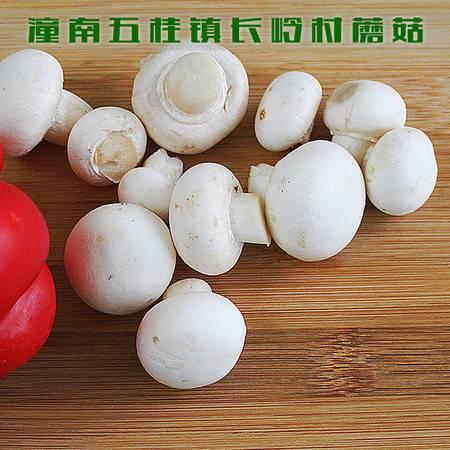 重庆潼南 五桂镇长岭村蘑菇 1公斤(仅限潼南区内销售)