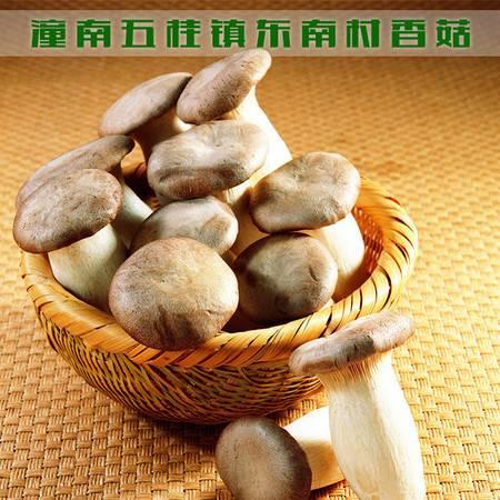重庆潼南 五桂镇东南村香菇 1公斤(仅限潼南区内销售)