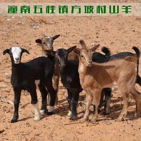 重庆潼南 五桂镇方坡村农家山羊1只(约39斤)(仅限潼南区内销售)
