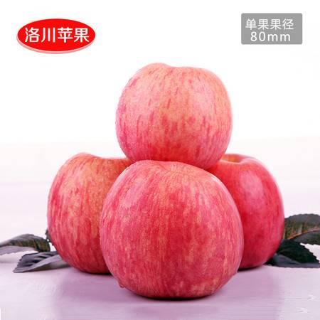 洛川苹果陕西苹果洛川红富士苹果水果20枚80mm