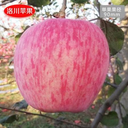 洛川苹果陕西苹果洛川红富士苹果水果9-90大苹果礼盒装
